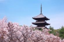京都世界文化遺産:仁和寺