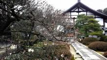 京都十三佛霊場:隋心院