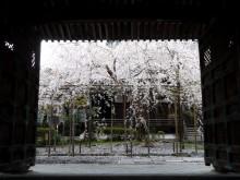 4月の京都観光:毘沙門堂