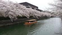 3月の京都観光:岡崎疎水
