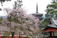 4月の京都観光:醍醐寺