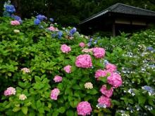 6月の京都観光:藤森神社