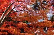 秋・紅葉おすすめスポット:神護寺