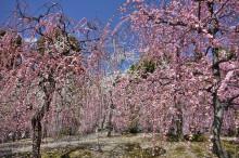2月の京都観光:城南宮