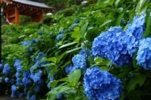 6月の京都観光:三室戸寺
