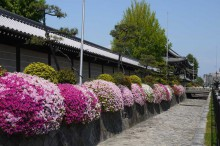 京都世界文化遺産:西本願寺