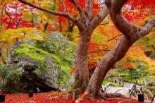 秋・紅葉おすすめスポット:宝厳院