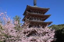京都世界文化遺産:醍醐寺