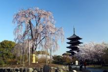 京都世界文化遺産:東寺
