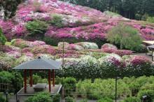 4月の京都観光:三室戸寺