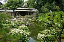 6月の京都観光:両足院